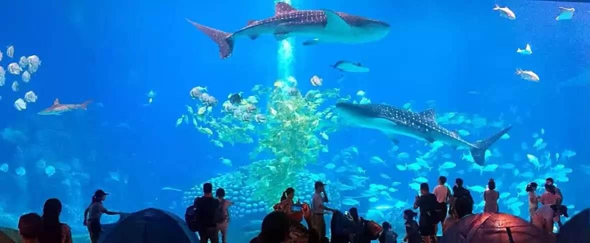 游览【长隆海洋王国】珠海长隆海洋王国八大主题区的每个区域都包含游乐设计、表演和动物展示三大元素,同时拥有领衔世界、称霸亚洲、惊世骇俗的看点:惊险刺激为主的雨林飞翔,以世界顶级娱乐观赏为主的海洋奇观;适合儿童游乐项目为主的以及合家游玩的缤纷世界;以海豚观赏为主的海豚湾;以冰雪景观为主的极地探险;以水为主题的海象山;以表演为主的横琴海;以迎宾、观光、购物休闲为主的海洋大街。八个不同主题带给你八个不同的故事,让游客都置身于海洋世界中,畅游海洋动物带给宾客非一般的各种精彩。 走进海洋馆,犹如置身神奇海底世界,游